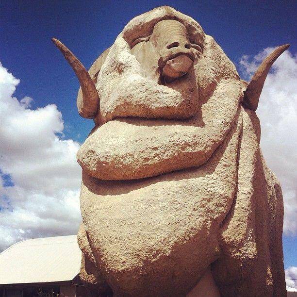 Big Merino Goulburn NSW #Australia