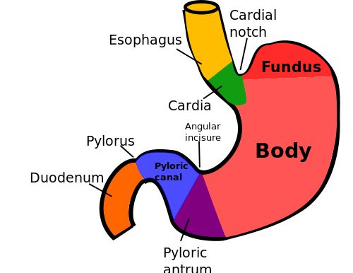 The 47 best anatomy images on pinterest nursing human anatomy and causes of nasal pain on or inside the nose healthhype fandeluxe Images