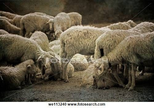 a flock of sheep in the picturesque countryside of Tuscany
