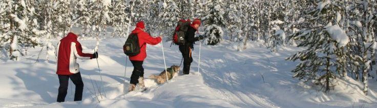 Snowshoeing around Saija Lodge, Jokijärvi, Taivalkoski, Kuusamo Lapland, Finland