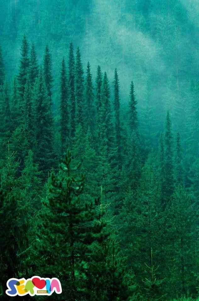M s de 25 ideas incre bles sobre paisaje con rboles de for Arboles ornamentales de hoja perenne