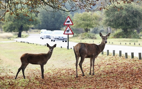 """Audio of a woman's complaint to a local radio station about the location of """"deer crossing"""" signs has gone wildly viral."""