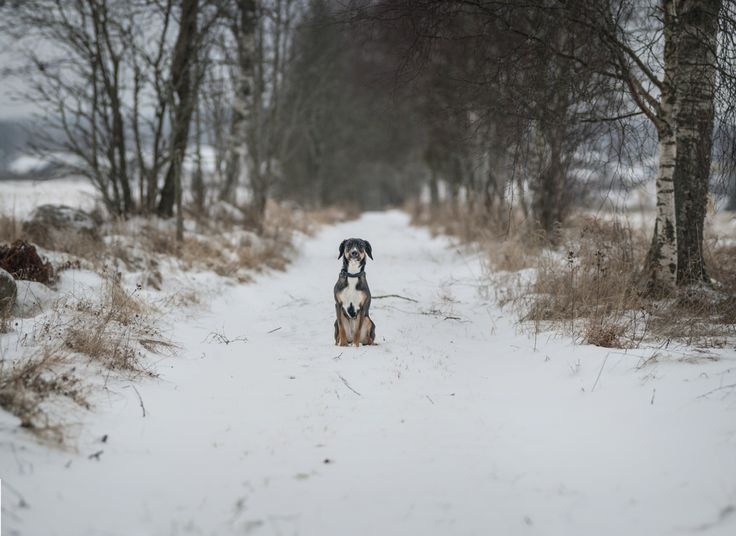 """Brenizer"" method! A lovely shot of my dog!  Wintertime!!"