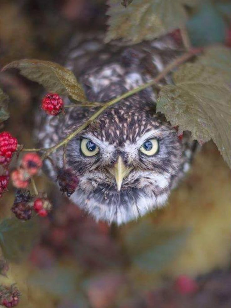 89 best images about owls are a hoot on pinterest for What owls look like without feathers