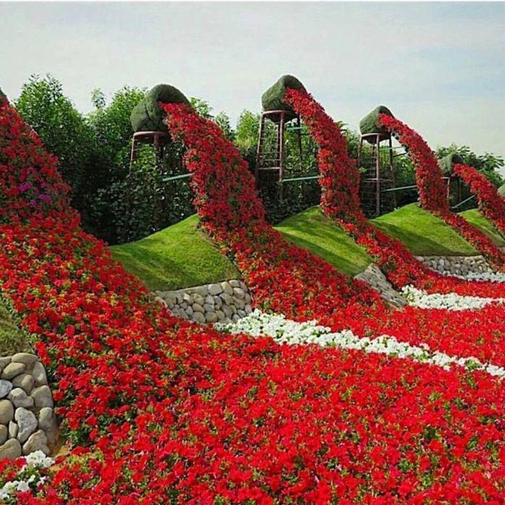 Miracle Garden in Dubai beautiful nature flowers travel