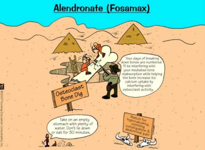 Alendronate Fosamax Osteoporosis