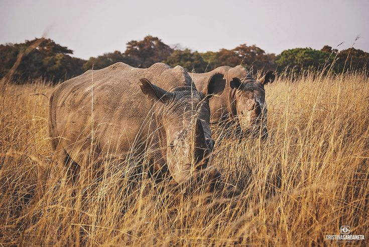 Hace un par de años realice un viaje al sur de Africa. Es una parte del mundo que siempre me llamo y después de conocer  una pequeña parte de ese continente me di cuenta del porqué. La razón princ...