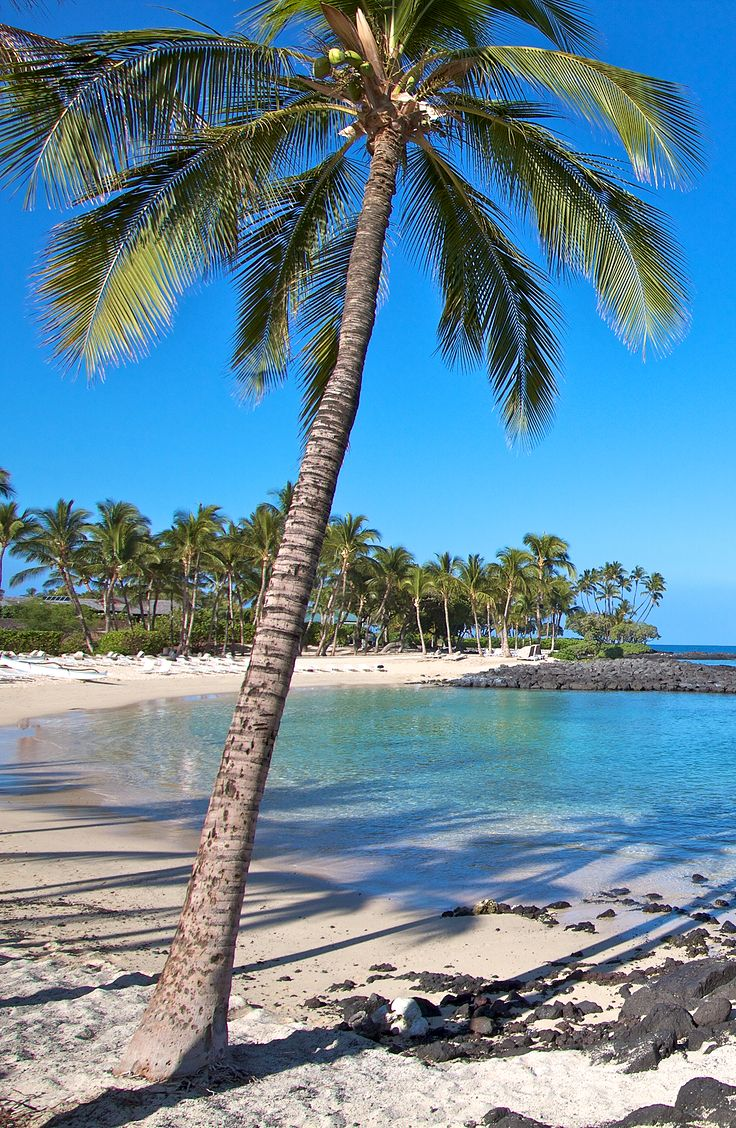 Beach Club at Mauna Lani Resort. One of the best spots to snorkel in Hawaii. South Kohala Management guests receive free access to this private family and kid friendly lagoon. SouthKohala.com