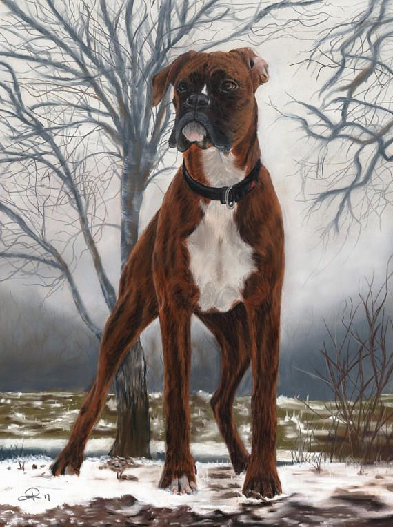 Hey, I found this really awesome Etsy listing at https://www.etsy.com/listing/559571095/boxer-dog-card-boxer-dog-dog-lover-pet