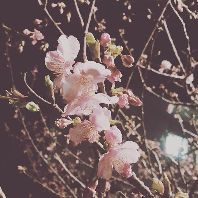 【serendipity_0718】さんのInstagramをピンしています。 《ほんとうに早い😳 帰り道に見つけたので📷🌃🌸 みなさんにも ほんのちょっと小さなの幸せを おすそ分けできたらなと。。。 桜咲きますように!!!!!🙏 今頑張らなくていつがんばるんだ〜〜!!! ・ #勉強垢 #看護学生#第106回看護師国家試験 #桜#咲きますように#看護学生さんと繋がりたい #海の見える街の田舎の看護学生》