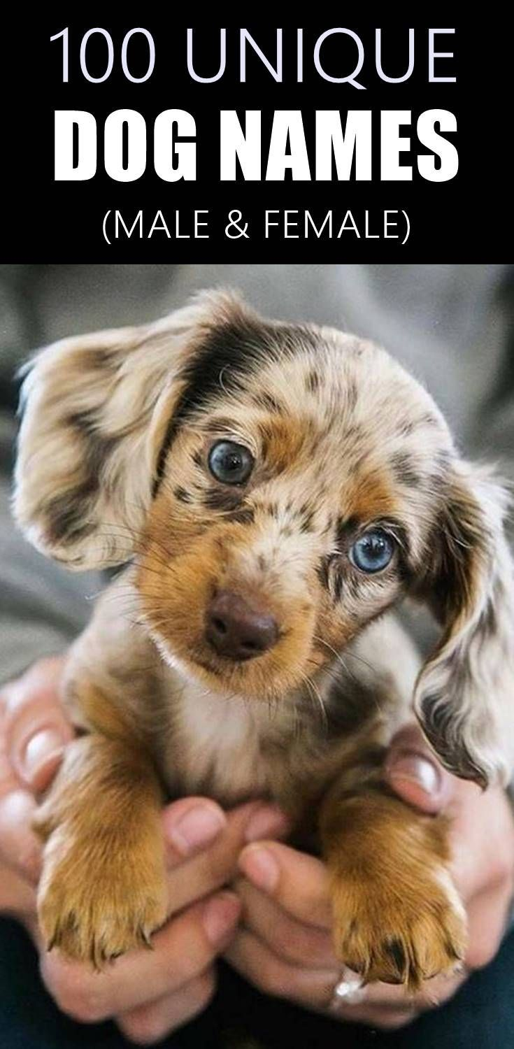 100 Unique Dog Names For Boys Girls In 2020 Female Dog Names