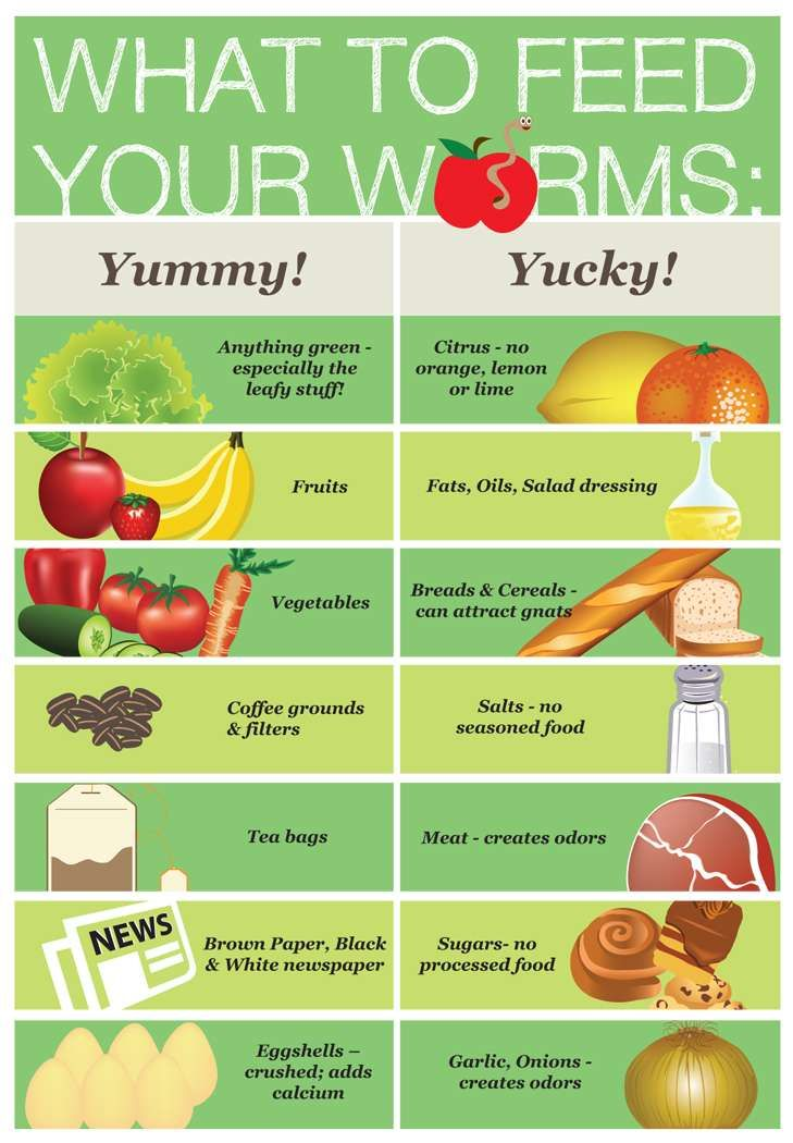 What to Feed Your Worms