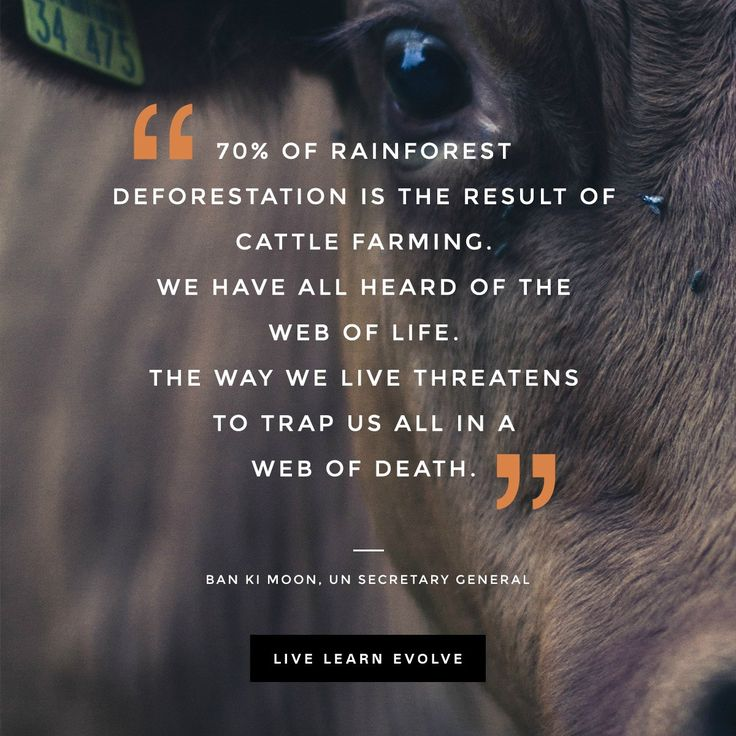 """70% of rainforest deforestation is the result of cattle farming…the way we live threatens to trap us all in a web of death"" – UN Secretary General, Ban Ki Moon - More at: http://quotespictures.net/22525/70-of-rainforest-deforestation-is-the-result-of-cattle-farming-the-way-we-live-threatens-to-trap-us-all-in-a-web-of-death-un-secretary-general-ban-ki-moon"