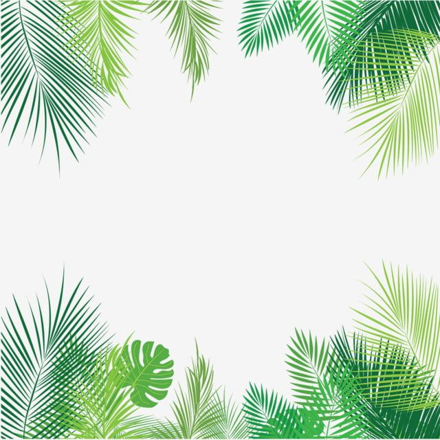 Tropical Palm Leaves Png Png Free Download Palm Tropical Leaves