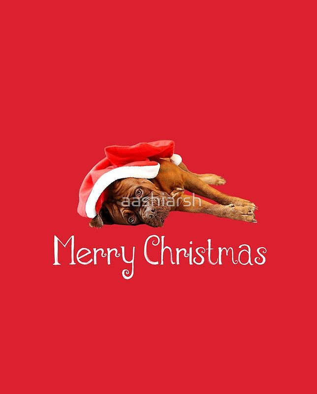 Dogue De Bordeaux Dog Sleeping with Christmas Hat