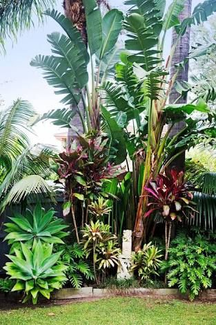 Image result for bahamas style full sun tropical plants