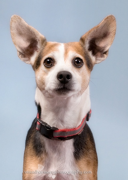 this dog needs a home.   Jill Flynn does amazing pet photography.
