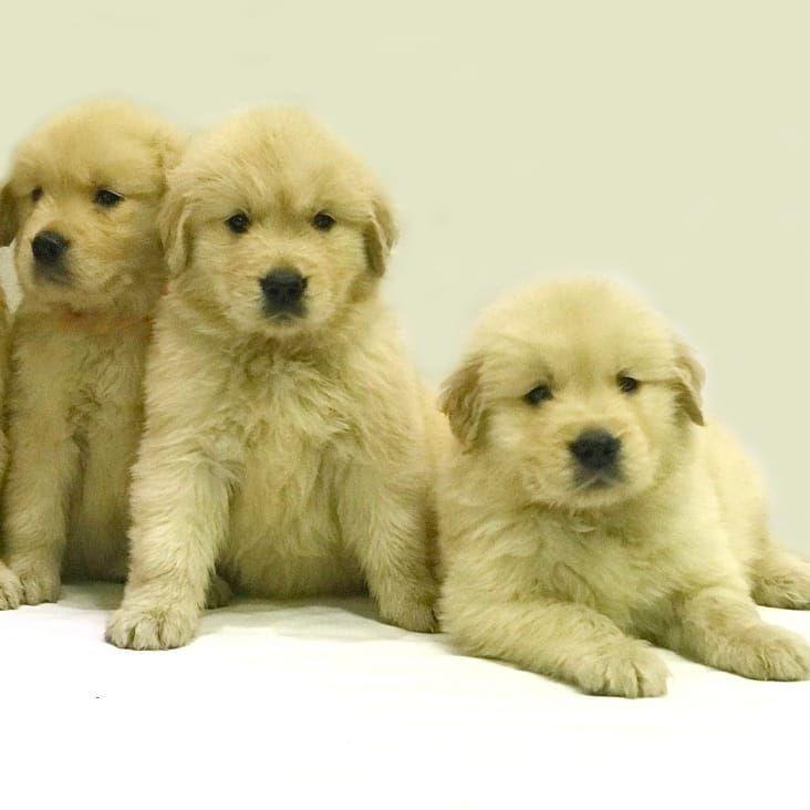 Weiter Geht S Um Deine Kuscheligsten Sunday Puppies Zur Verfugung