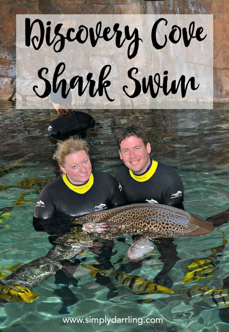 How many people can say they swam with sharks? Now you can too with a visit to Discovery Cove. Read more about the Discovery Cove Shark Swim Experience and whether it is worth the added cost.
