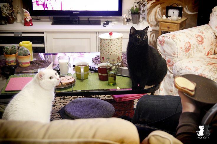 omnonomnom? :o  #cats #cat #neko #gato #kittens #mańki