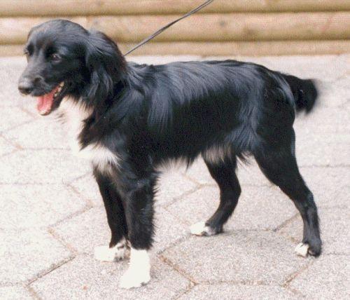 Harvinaiset koirarodut - Sivu 10 - Petsie