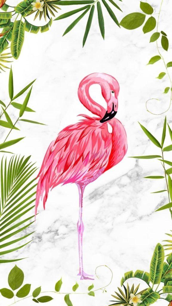 Iphone Wallpaper Iphone Wallpaper Hd 4k In 2020 Flamingo