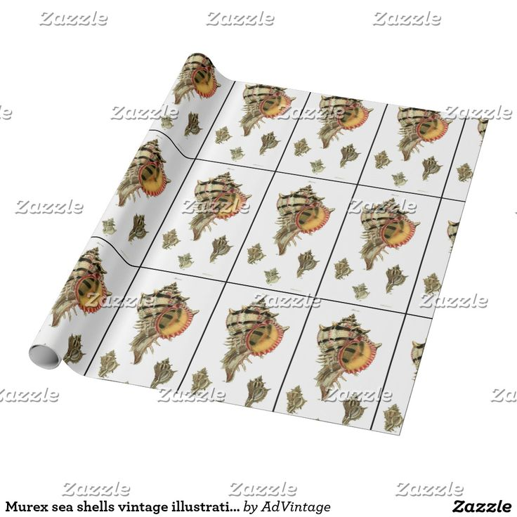 Murex sea shells vintage illustration wrapping paper