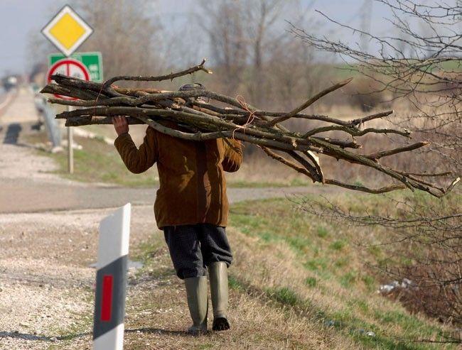 Levente fát lopott, hogy fűtsön: fejbe lőtték a rendőrök - MindenegybenBlog