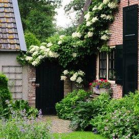 25 beste idee n over klimhortensia op pinterest witte tuinen wijnstokken en hortensia tuin - Wijnstokken pergola ...