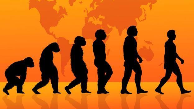are humans still evolving essay