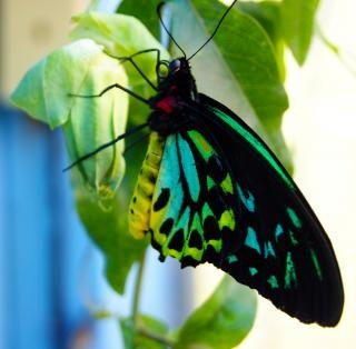by Brian NorcrossBeautiful Butterflies, Stockings Photos, Colors Combos, Beautiful Photos, Green Butterflies, Pretty Colors, Butterflies Moth, Exotic Butterflies, Butterflies Dragonflies Moth