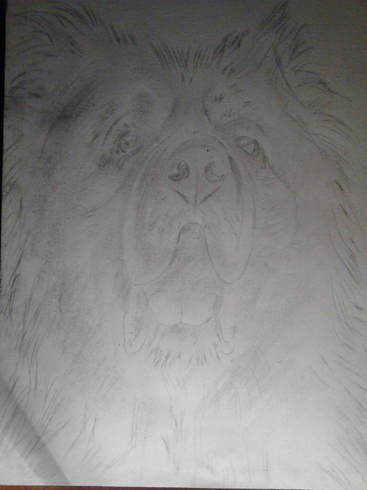 Catel,crochiu,pe panza.   /  Puppy, sketch, on canvas.  /