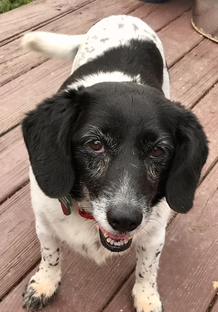 Adopt millie on petfinder in 2020 dog adoption adoption