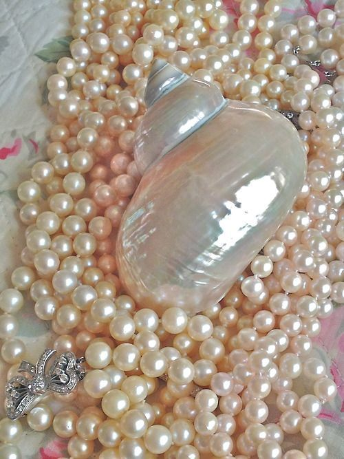 377 Best Images About Pearls Shells And Lace On Pinterest