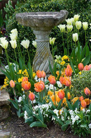 Aged Birdbath In The Tulips