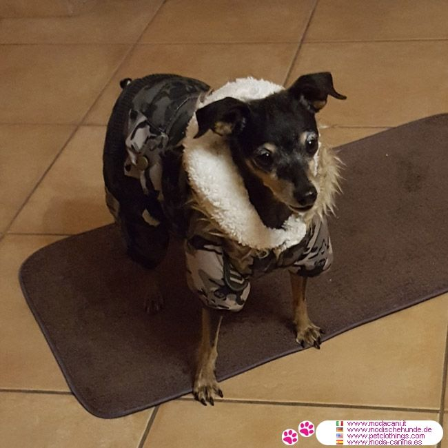 Green Camo Winter Suit for Dogs with Pants and Jacket #PetClothings #Pinscher - Winter suit, ideal for the cold season, protecting your dog from the cold and light rain; made in 2 parts, pants and jacket, ideal for small dogs