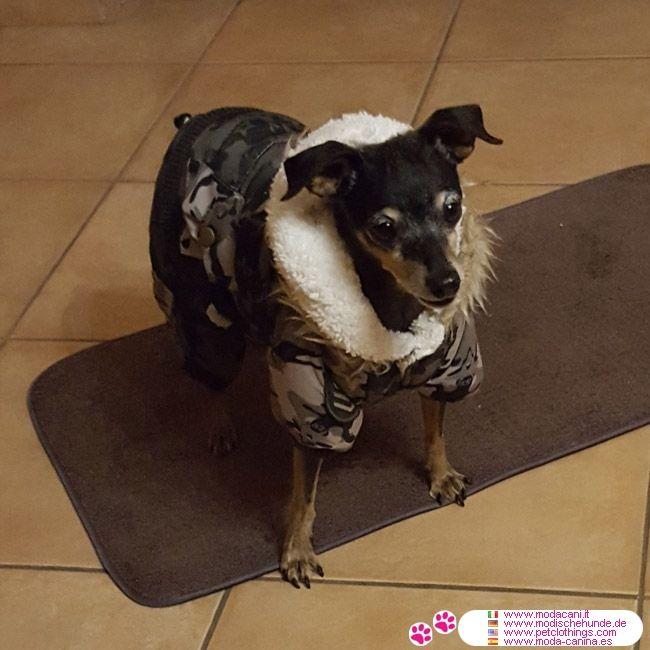 Traje de Camuflaje para Perros con Pantalones y Chaqueta #ModaCanina #Pinscher - Este modelo de traje de camuflaje para perros es ideal para la temporada de frío, protegiendo su perro, tanto desde el viento, el frío y la lluvia