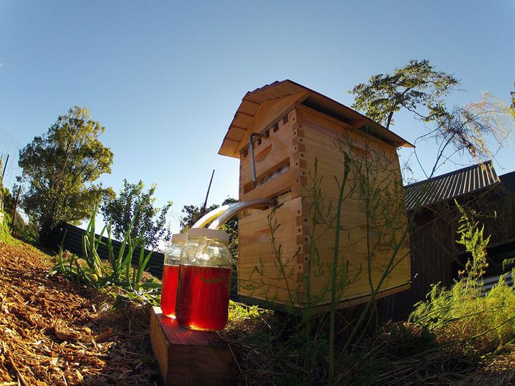 New beehive lets you harvest honey automatically without disturbing the bees; http://www.honeyflow.com