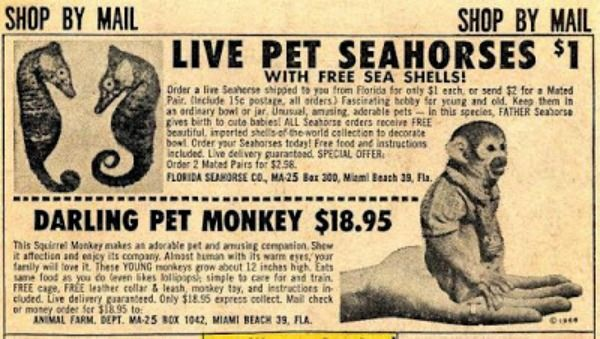 Squirrel monkeys used to be advertised for sale in papers and magazines.  On a personal note, I wanted to order a monkey from a magazine as a child and couldn't understand why my parents refused. lol.    http://horinca.blogspot.com/2007/09/mysterious-pet-monkey-ads-of-1960s.html