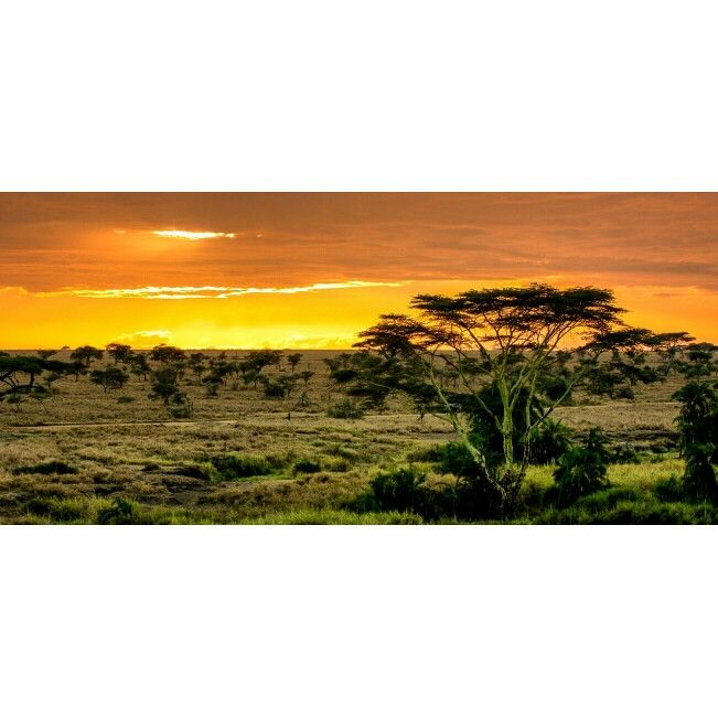 Oh, i love the sunrises over the mighty Serengeti plains.
