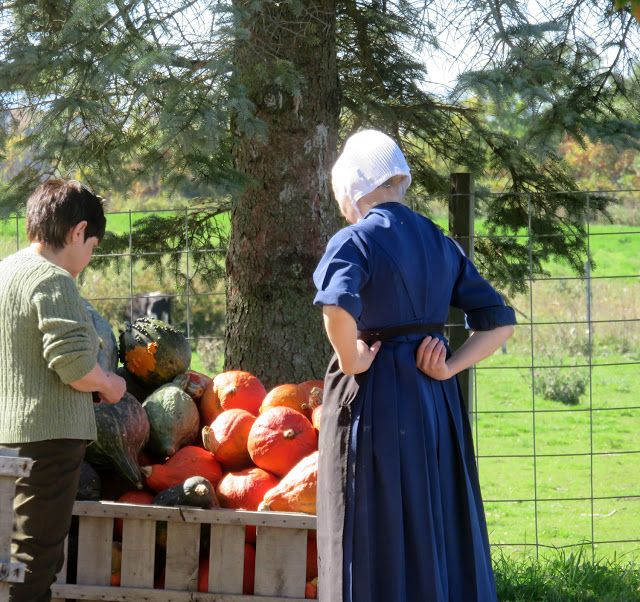AMISH DISCOVERIES: Author's Visit to N.Y. Amish in Montgomery County ...