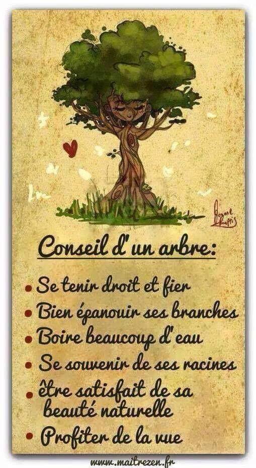 Et vous, quel arbre êtes-vous* ?