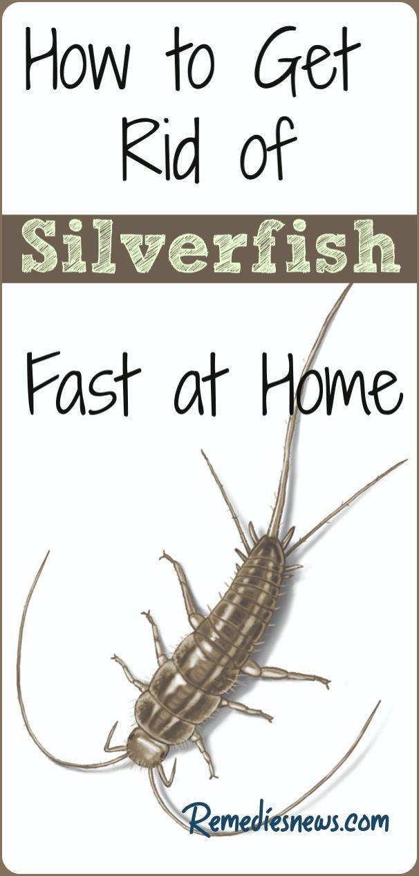 How To Get Rid Of Silverfish Naturally 14 Home Remedies With