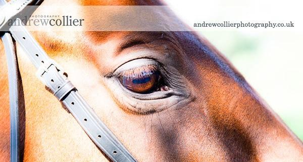 equestrian_portrait_gal_4