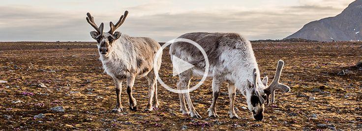 Samisk musikk