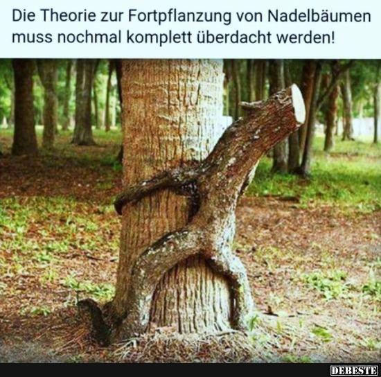 Die Theorie zur Fortpflanzung von Nadelbäumen muss nochmal.. | Lustige Bilder, Sprüche, Witze, echt lustig