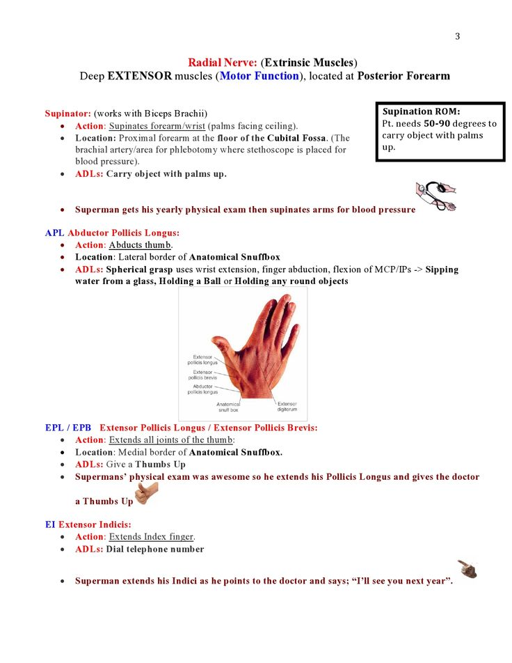 Peripheral Nerve Injuries Study Guide  page 3  https://www.inkling.com/read/skirven-rehabilitation-the-hand-upper-extremity-6th/chapter-45/presentation-of-specific-nerve