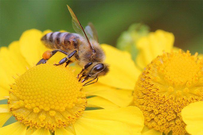 """""""Es gibt kaum einen besseren Ort als die Stadt, um Bienen zu halten"""", meint Ethard Maria Klein. Klein ist Freizeit-Imker in Hamburg und damit Teil einer internationalen Bewegung. Ob in New York, Paris oder Berlin – überall in den Metropolen boomt die Stadt-Imkerei."""