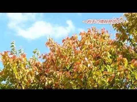 秋の盛岡市中央公園