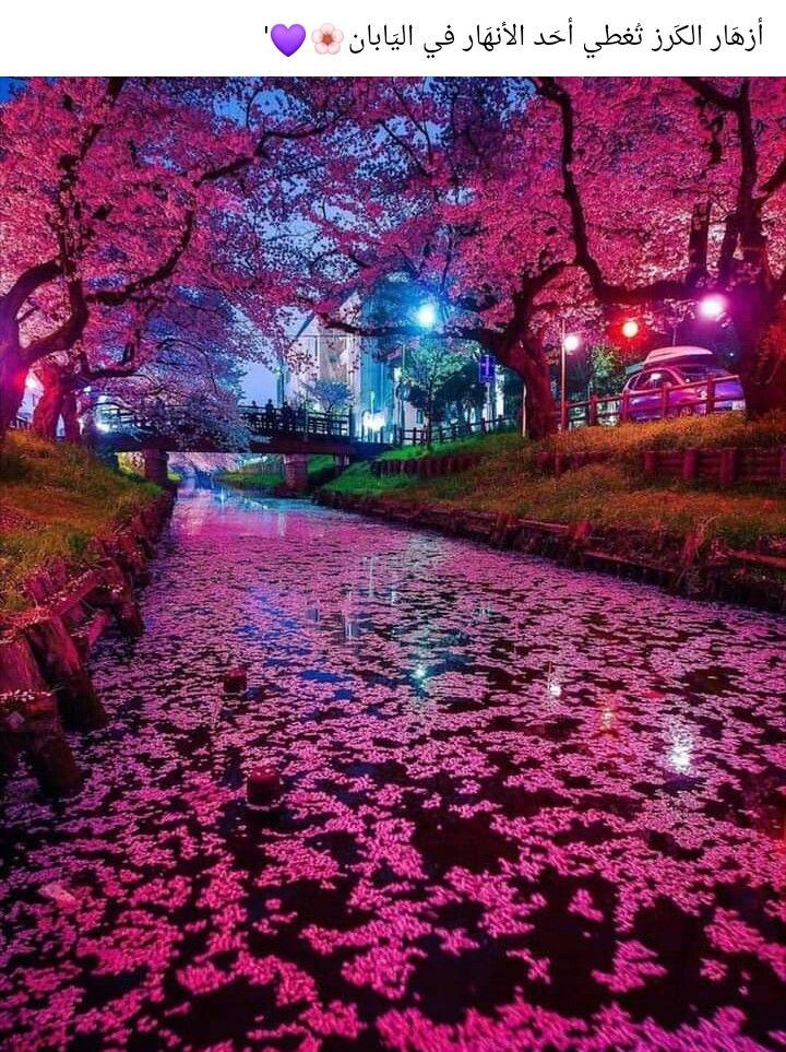 Pin By Ayat Murad On صورة ومعنى In 2021 Cherry Blossom Japan Japan Photography Japanese Cherry Blossom